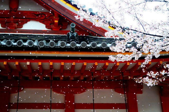 Festival Musim Semi di Jepang
