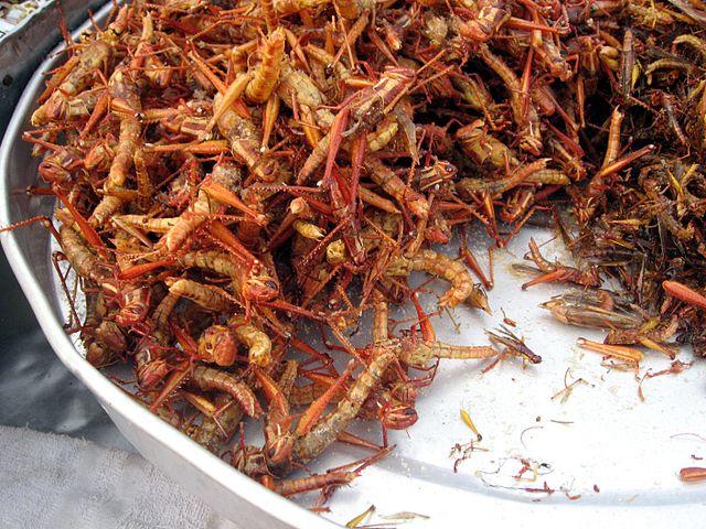 Dari Serangga Hingga Sop Reptil: Kuliner Ekstrem Dunia (Jangan Klik Untuk Yang Tidak Kuat Lihat) 1
