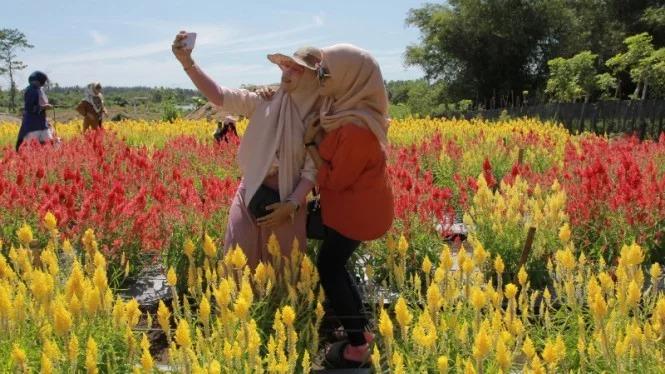 Celosia Garden: Destinasi 'Wah' di Bumi Serambi Mekkah 1