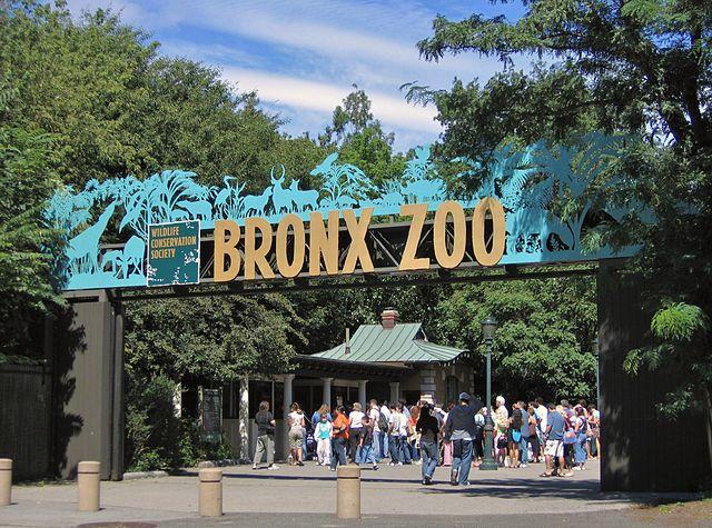 Jelajahi Fauna Unik di Kebun Binatang Terbaik Dunia 2