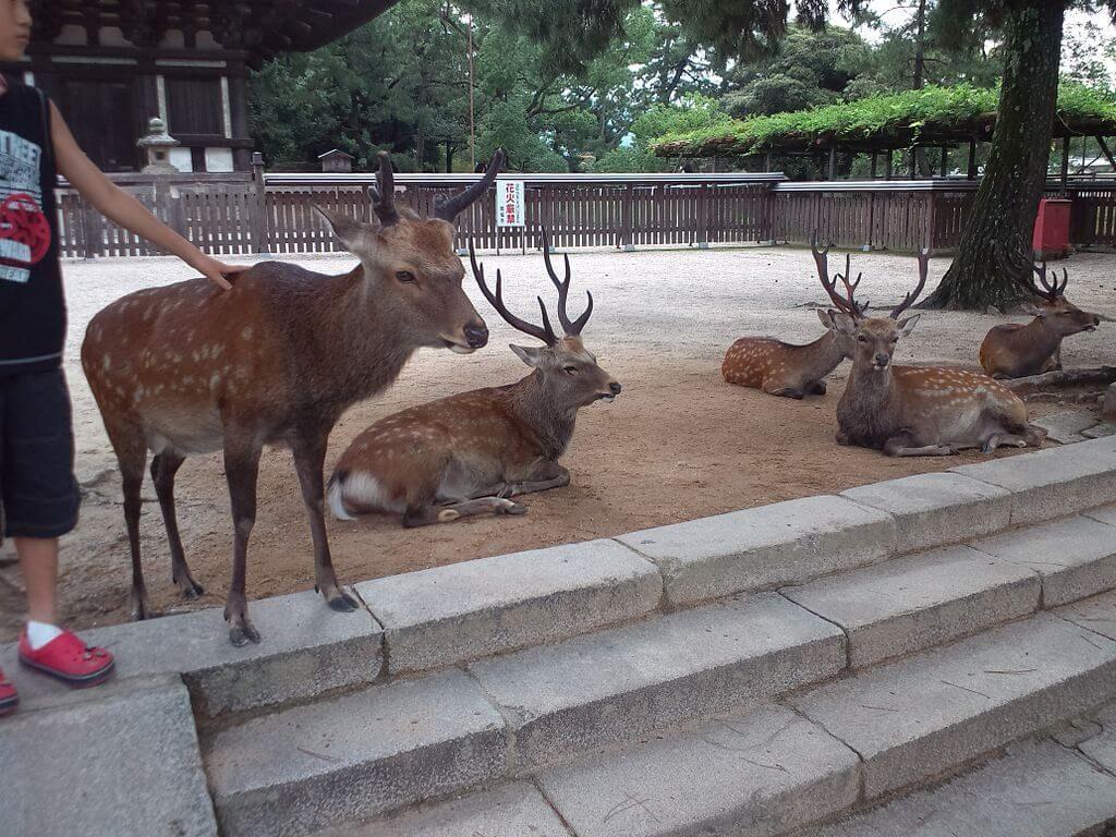 Nara Deer Park, Destinasi Wisata Jepang yang Ramah Anak 1