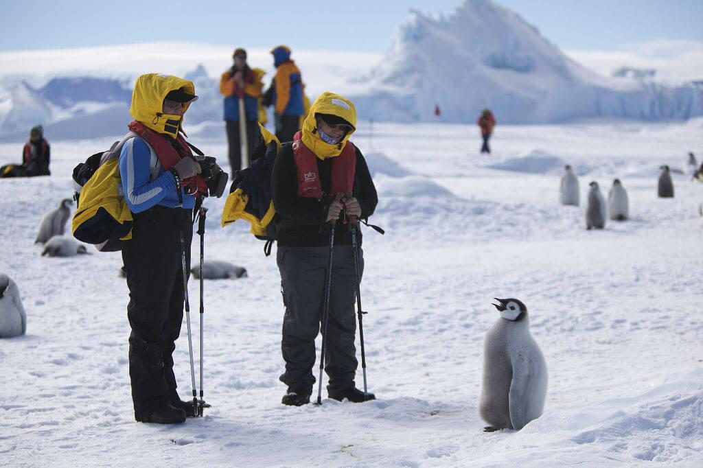 Australia Buka Lowongan Pekerjaan Untuk Penempatan di Antarktika 1