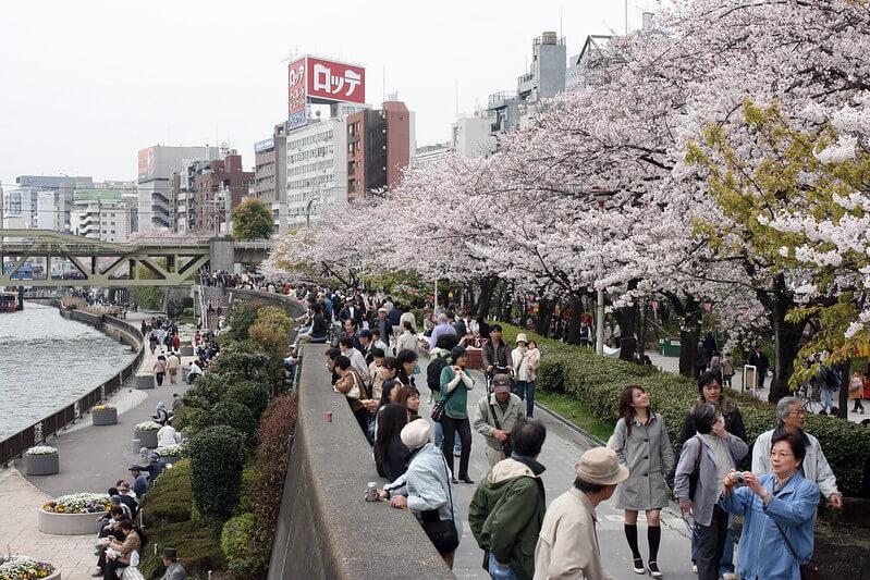Inilah 10 Spot Terbaik untuk Melihat Bunga Sakura di Tokyo 11